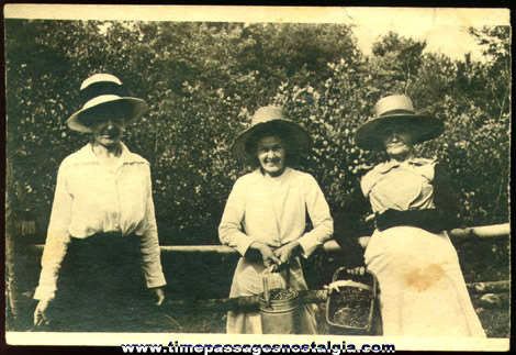 1910's Photograph Of (3) Berry Picking Ladies