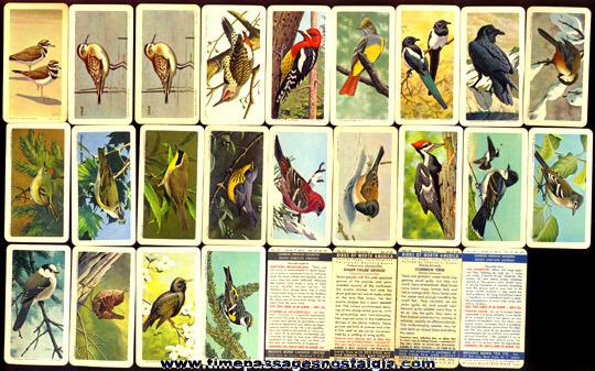 (52) Colorful Old Brooke Bond Tea Company Bird Trading Cards