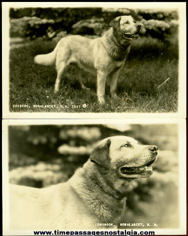 (2) Matching Unused 1927 Real Photo Dog Post Cards