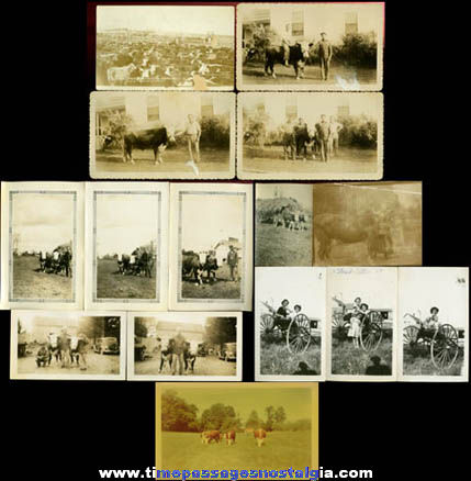 (15) Old Farm / Farming / Cattle Photographs
