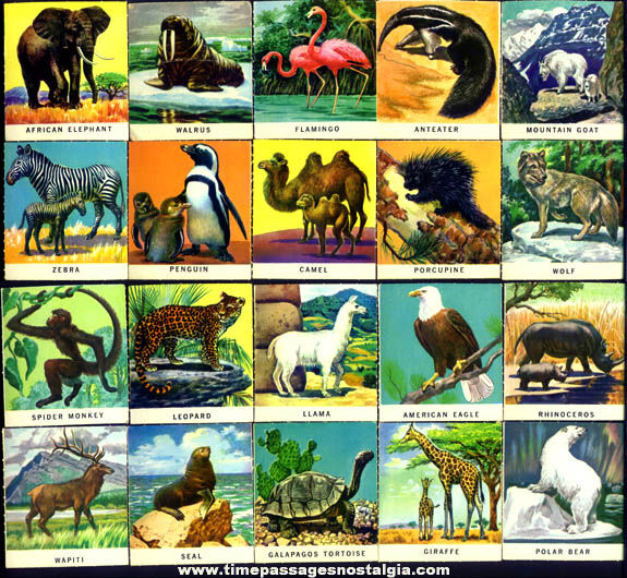 (38) Colorful Old Animal Trading Cards