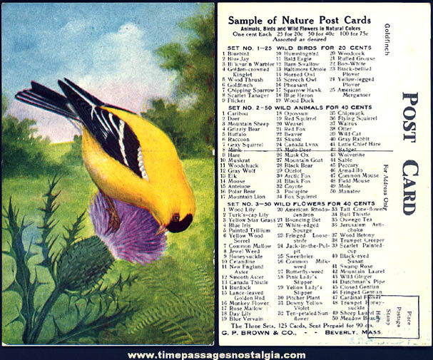 Colorful Old Post Card Company Advertising Sample Bird Post Card