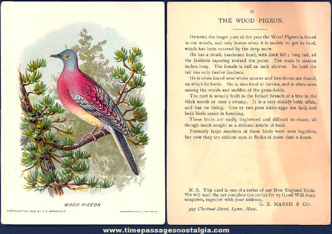 ©1888 Good Will Soap Advertising Premium New England Bird Trading Card