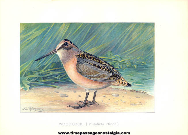 Colorful ©1897 New York Commisioners of Fisheries Game & Forest Bird Print