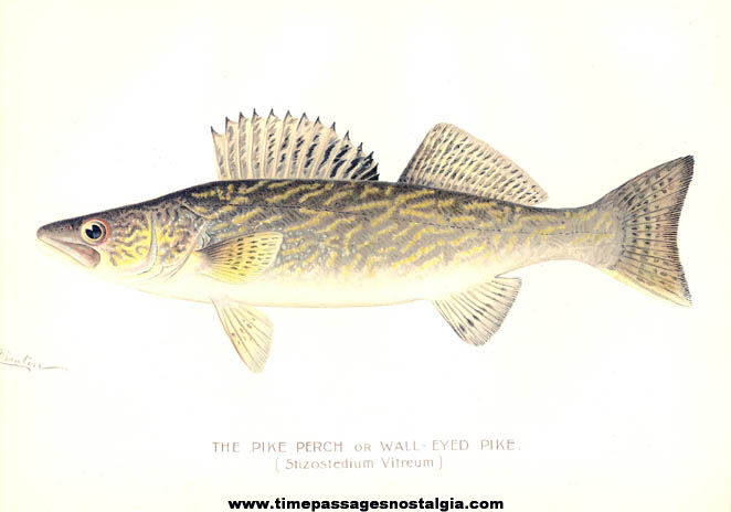 Colorful ©1897 New York Commisioners of Fisheries Game & Forest Fish Print